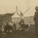 Dogs at Camp